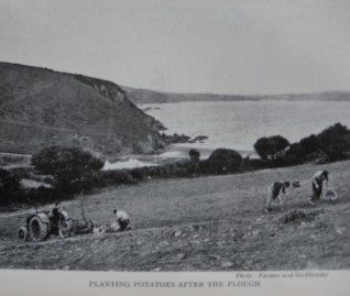 Dinas Island Farm. Potato fields 1940s just above Pwllgwaelod