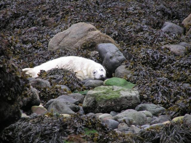 SealPups Pembrokeshire