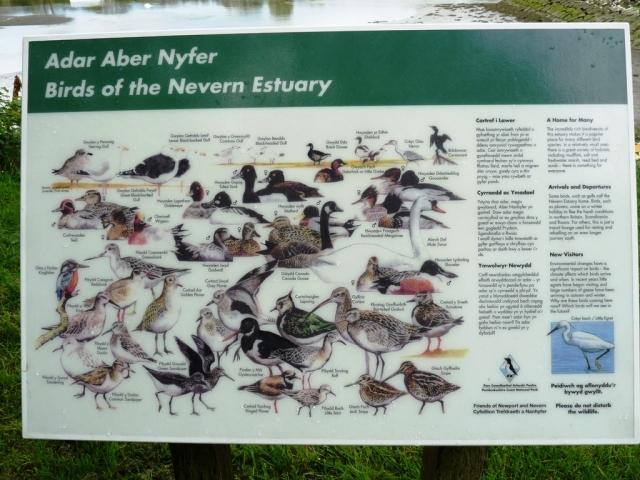 Birds of the Nevern Estuary