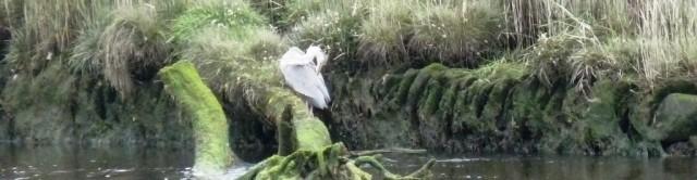 Heron at Newport bridge