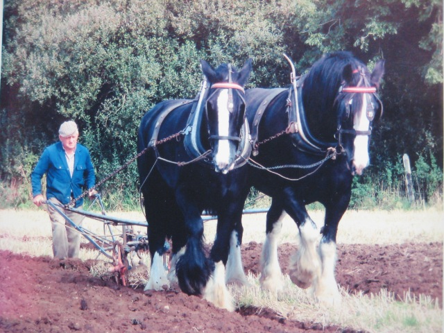 Ploughing with Bank house horses