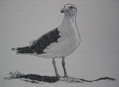 Great black-backed gull by Robert Gillmor