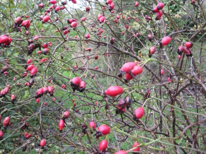 Manorowen Walled Garden