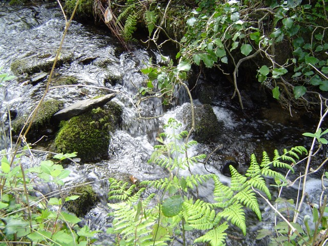 Stream at Dinas